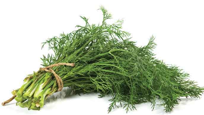 Dill - a common herb in Vietnamese cuisine.