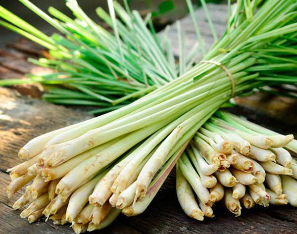 Vietnamese Lemongrass