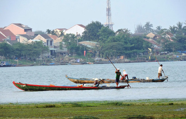 Mussel harvest season on Hoai River in Hoi An